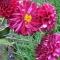 Las flores del recuerdo IV